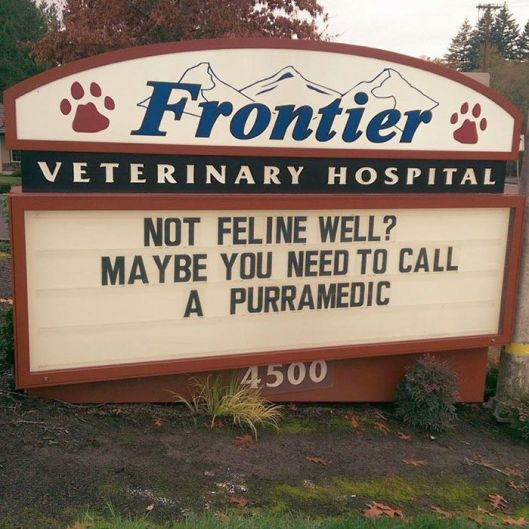 funny-cat-veterinary-clinic-signs-10-5d19ee39703fc__700