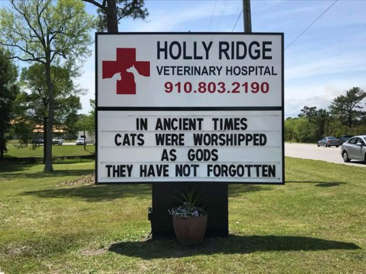 funny-cat-veterinary-clinic-signs-14-5d19ee541768d__700