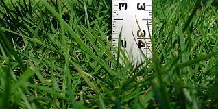 grass measured