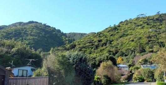 Kakariki hill view