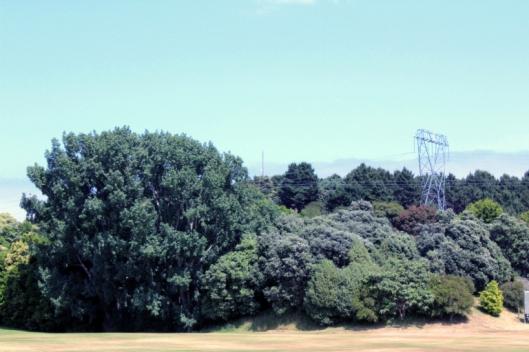 park-trees-a