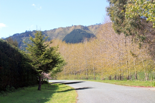 Peka Peka Road side