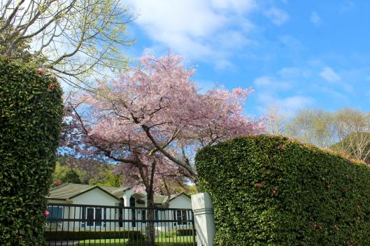 Winara Ave spring scene