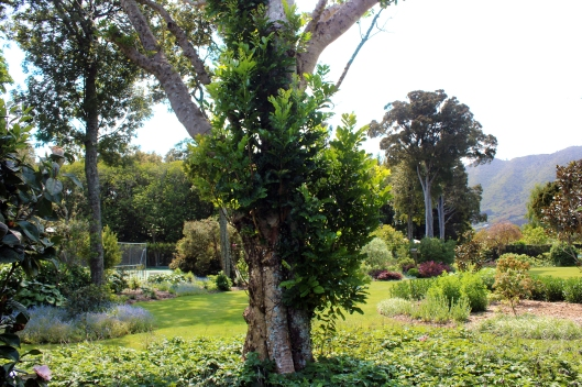 Awanui Garden 77