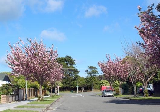 Belvedere Blossom