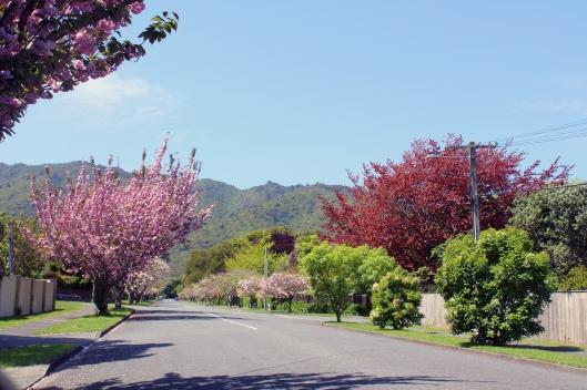 Kohekohe blossoms