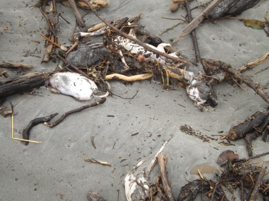 Affidavit, Nrth Beach, Trevor Reid 2