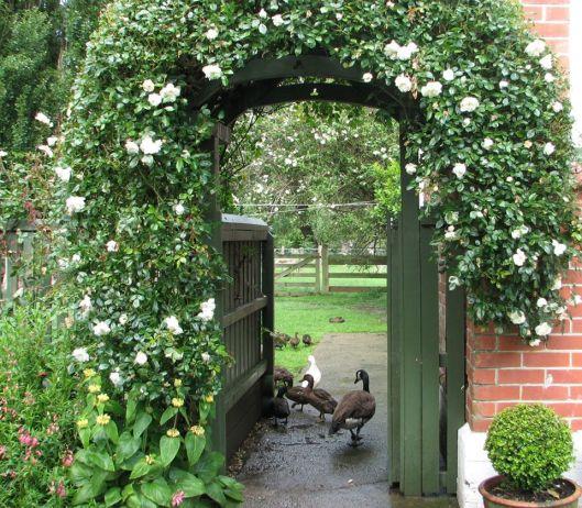 Carol Sawyer garden