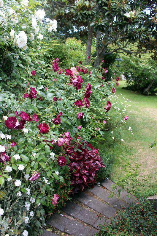 Ngarara garden