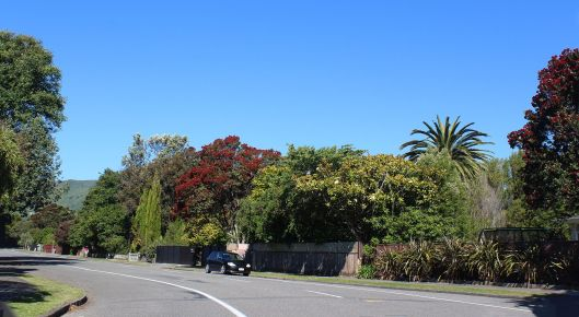 Park Avenue trees