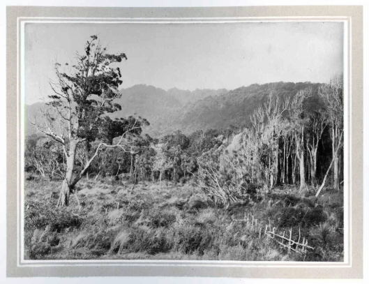 Waikanae hills from the WMR 1886