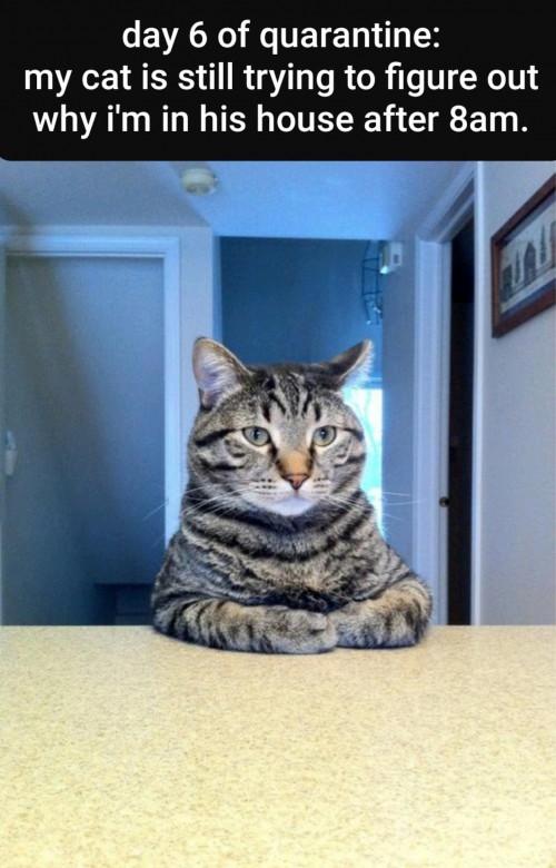 cat quizzical