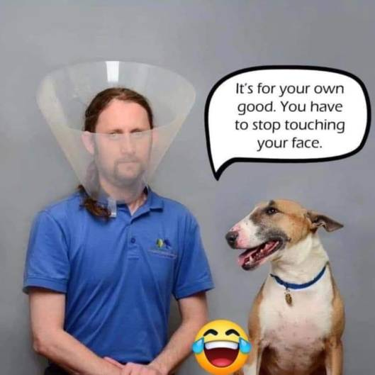 dogmask