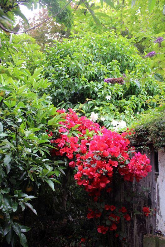 Huia garden 3