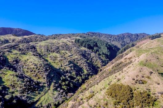 Reikorangi hills