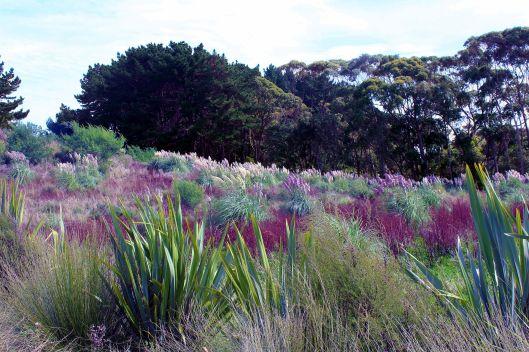 Waikanae Ewy plantings
