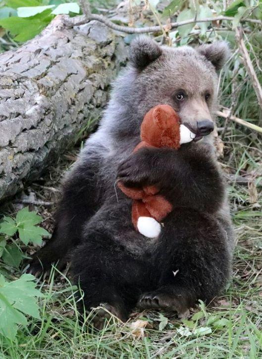 bear x 2