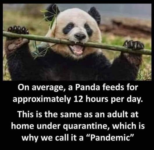 cv panda