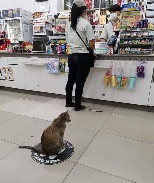 social distance cat