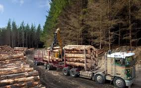 Timber industry 1
