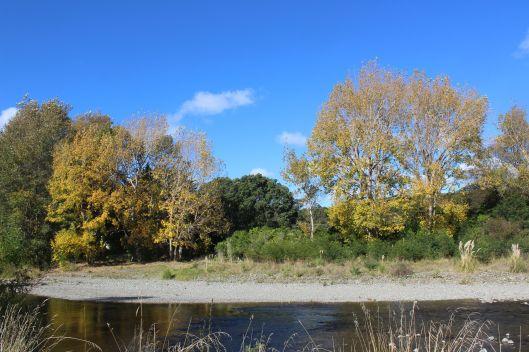 Waikanae South Bank autumn