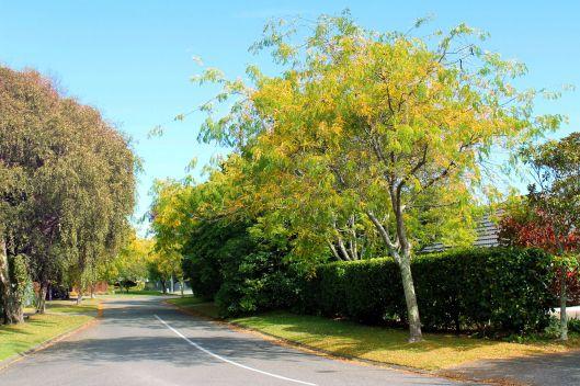 Waiky arbres automes