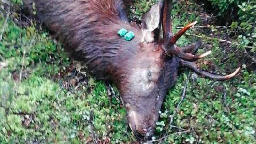 1080 kill deer