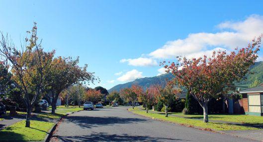 Awanui Drive autumn