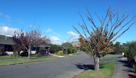 Awanui Drive trees