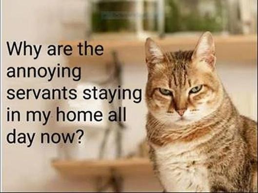 cat servants