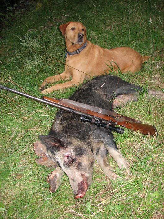 cochon chien