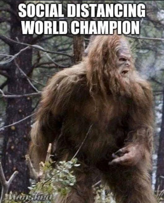 cv champion