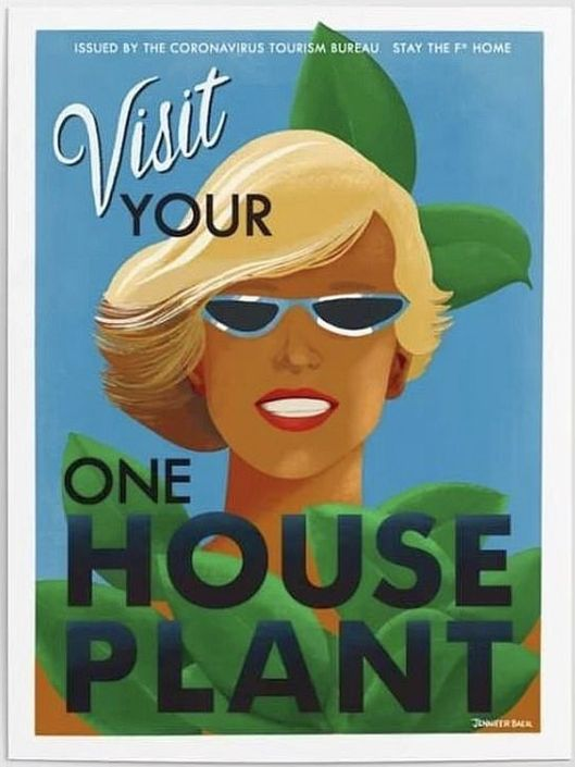 cv houseplant