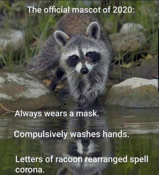 cv racoon