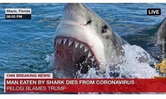 cv shark