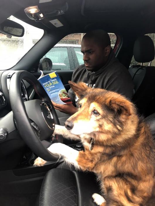 dawg drive