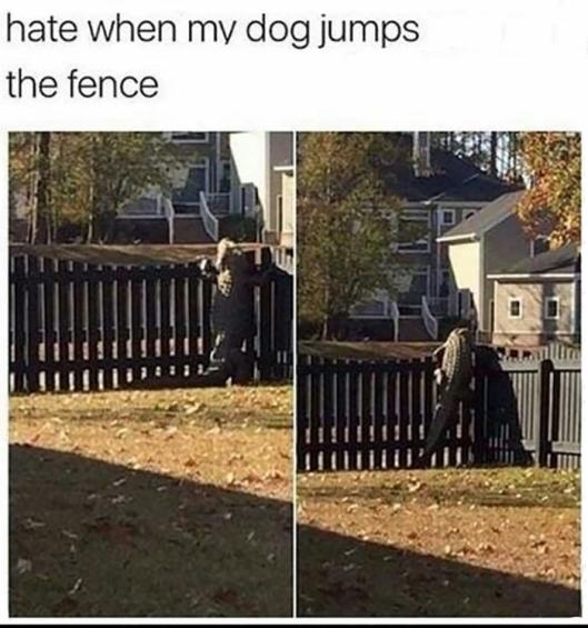 gator fence