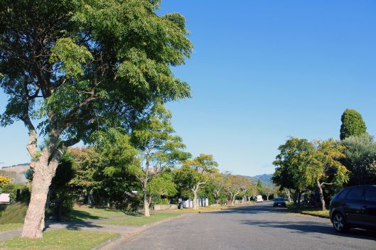 Nimmo Ave trees