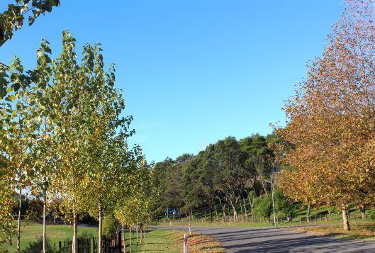 Peka Peka autumn