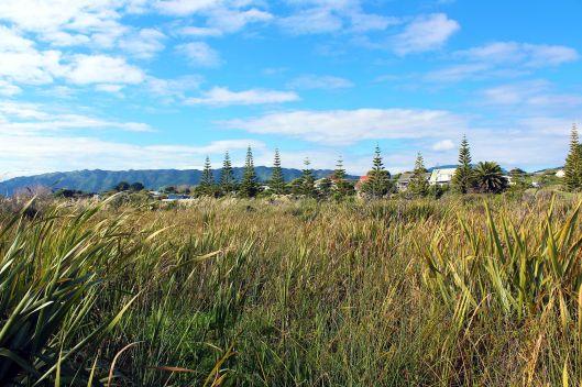 Waimeha Lagoon flax