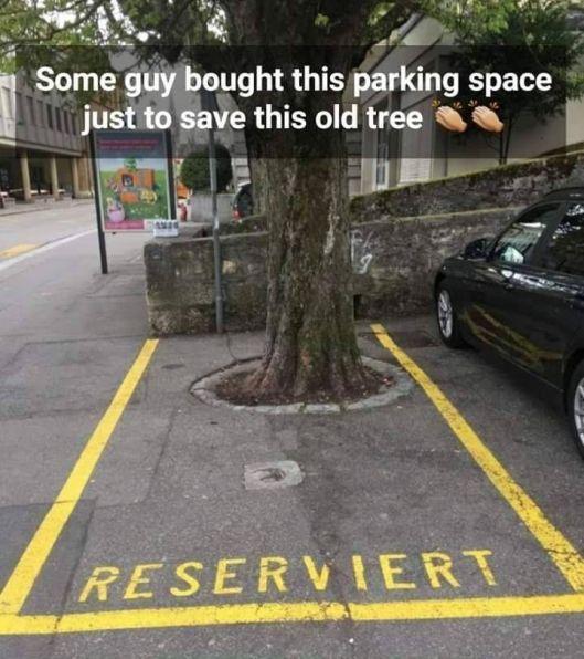 save a tree