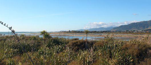 estuary-flax