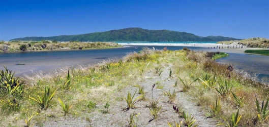 waikanae-estuary early planting